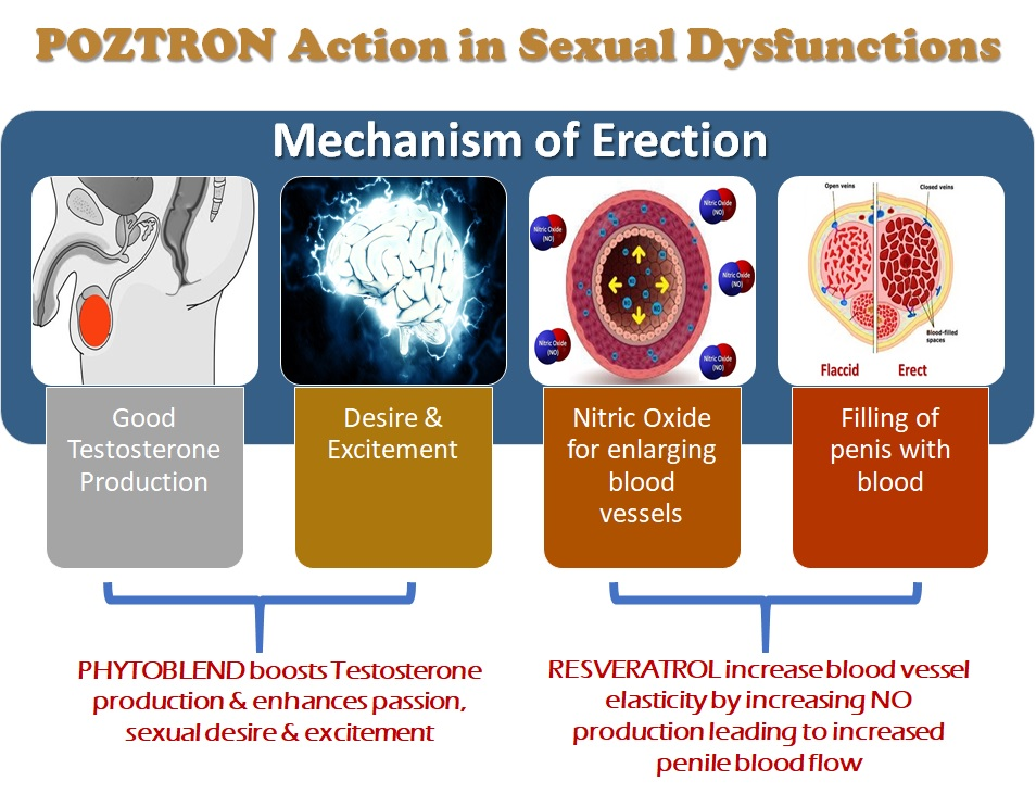 Erectile Dysfunction causes. Mechanism of Erection